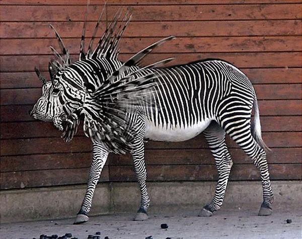 Feuer pferd dominopaper 1680x1050 kostenlos hintergrundbilder picture